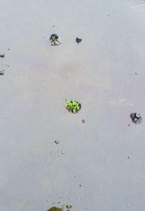 Зелёный асфальт, Москва абстракционизм, асфальт, дичь, неожиданно, новые технологии, сделано с душой, сюрреализм, укладывают асфальт