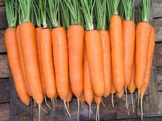 Сеялка для моркови
