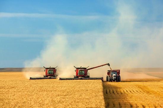 Уборка зерновых комбайнами