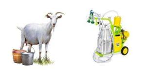 Какой доильный аппарат для коз выбрать?