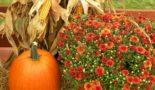 тыква и цветы