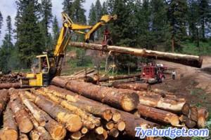 Заготовка леса трактором