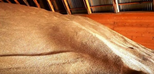 Защита от вредителей: безопасность зерна во время хранения